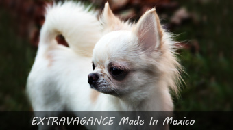 EXTRAVAGANCE Made In Mexico