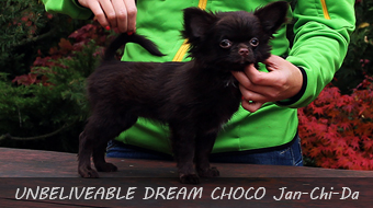 UNBELIVEABLE DREAM CHOCO Jan-Chi-Da