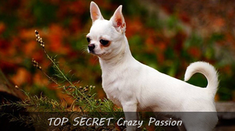 TOP SECRET Crazy Passion
