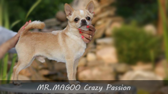 MR.MAGOO Crazy Passion