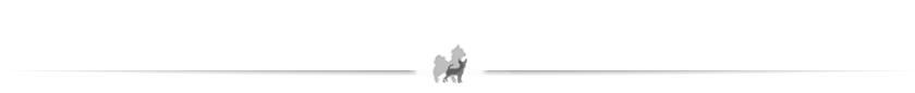chihuahau z rodowodem Związku Kynologicznego