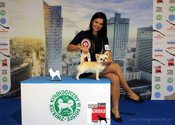 euro dog show 2018 chihuahua